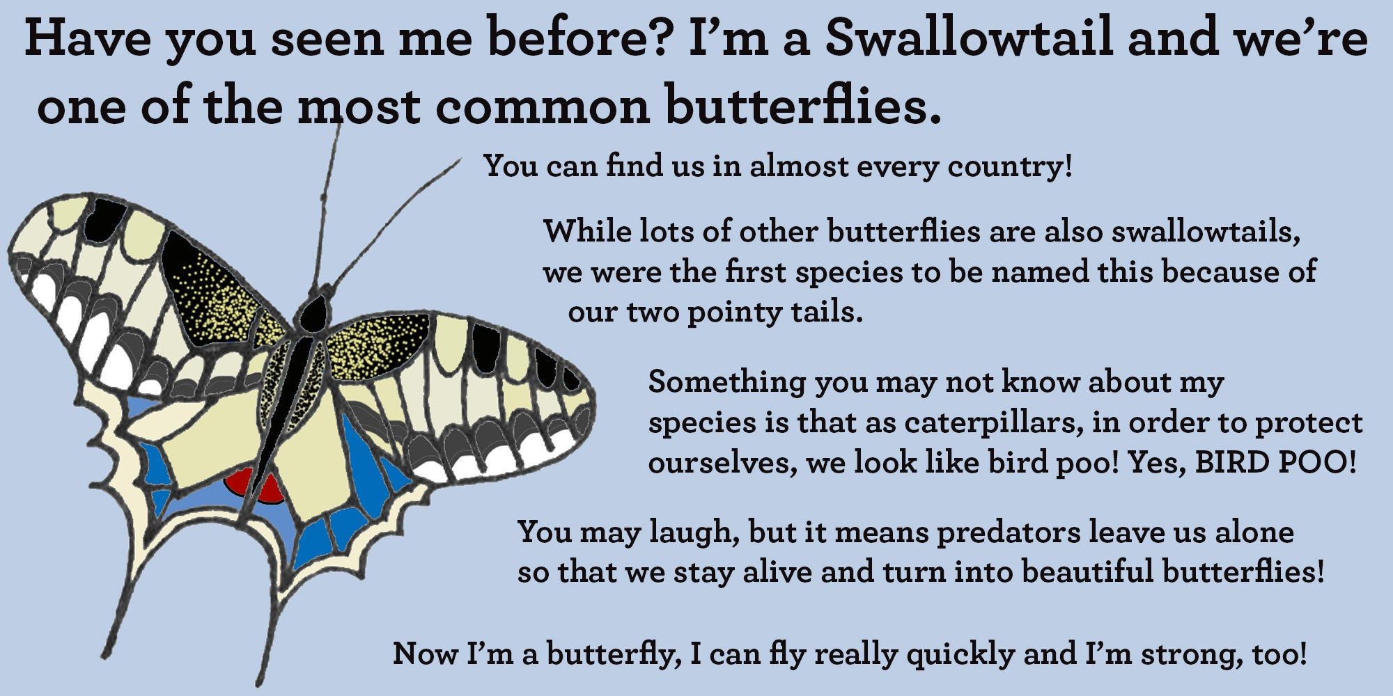 swallowtail butterfly facts