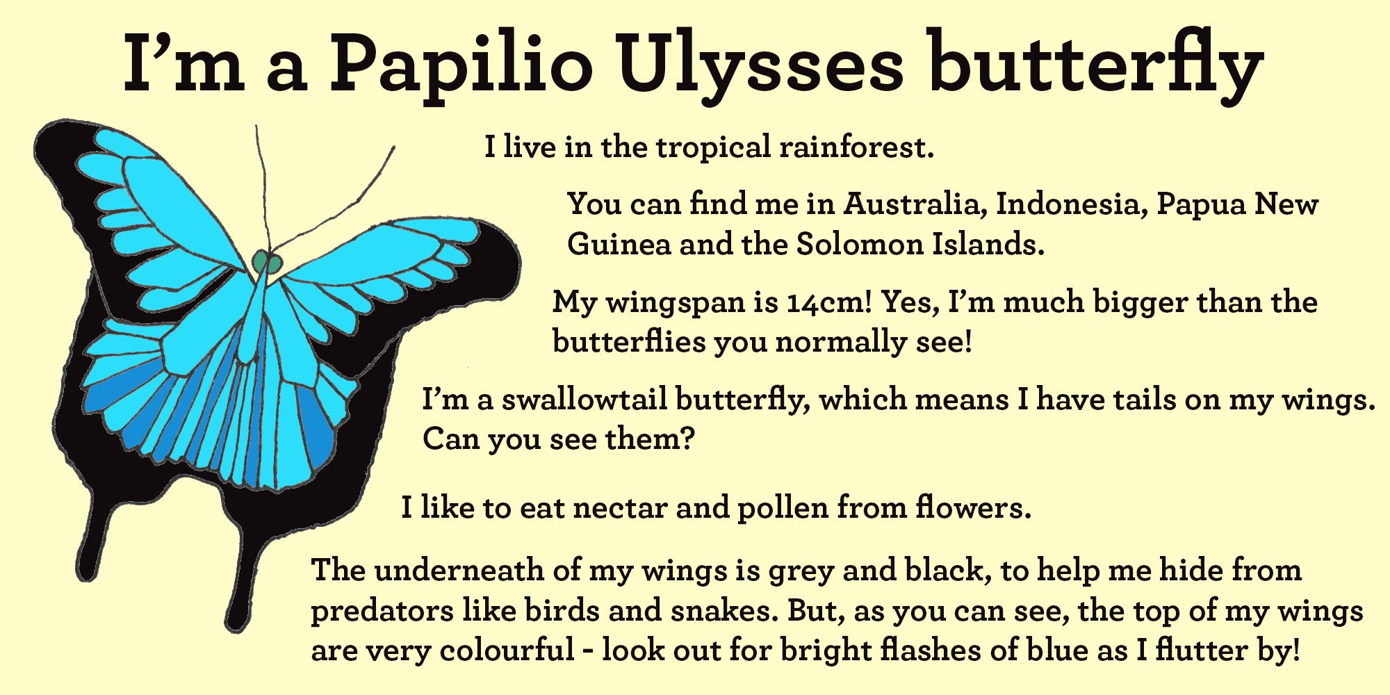 ulysses butterfly facts