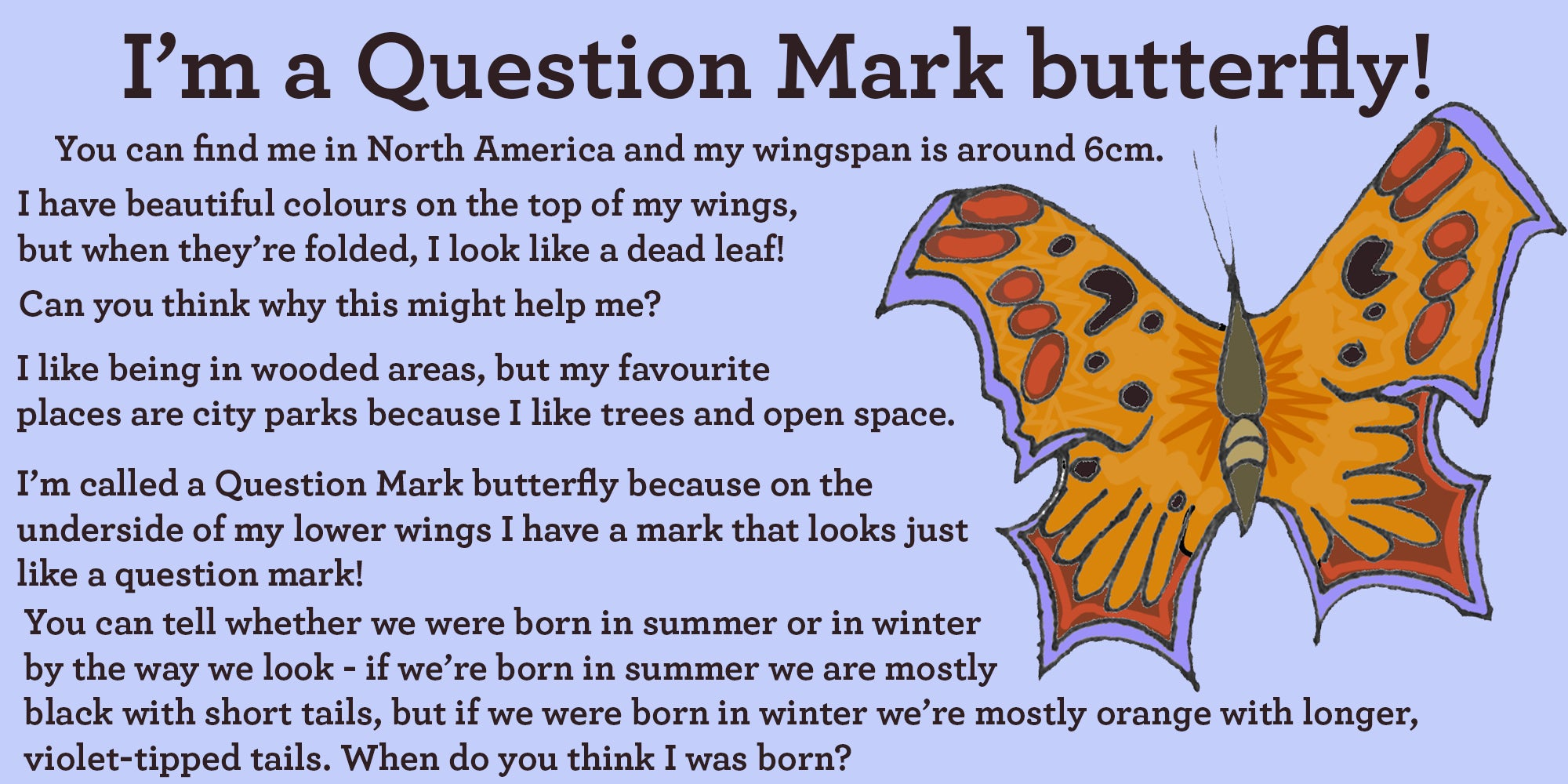 question mark butterfly facts