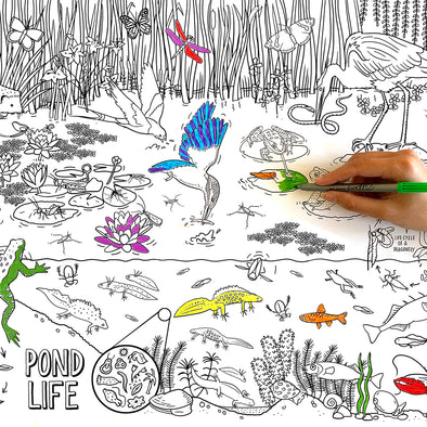 colour in pond life wrapping paper (3 sheets)