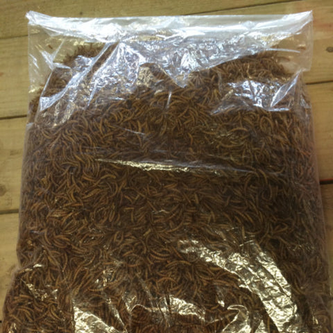 Meal Worms 1.5kg