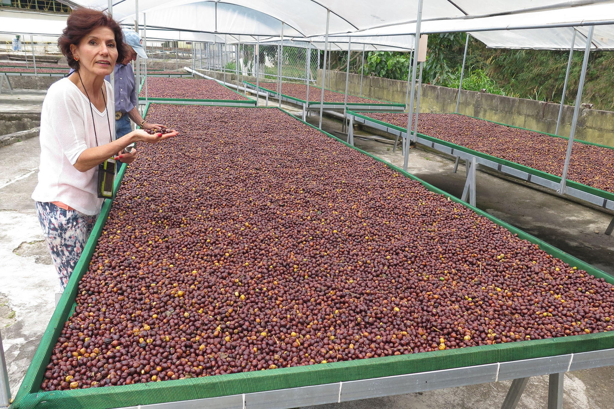 Coffee Stories featuring the Santa Elena Farm of Costa Rica