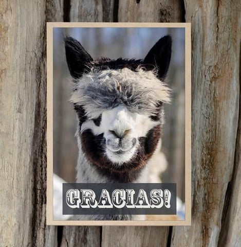 Alpaca Greeting Card - Gracias - Purely Alpaca