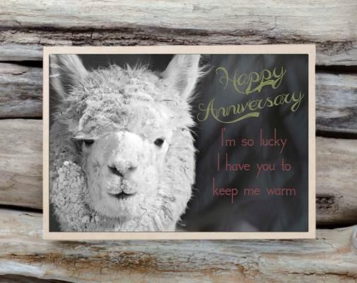 Alpaca Greeting Card - Happy Anniversary