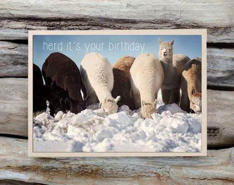 Alpaca Greeting Card - Herd It's Your Birthday - Purely Alpaca
