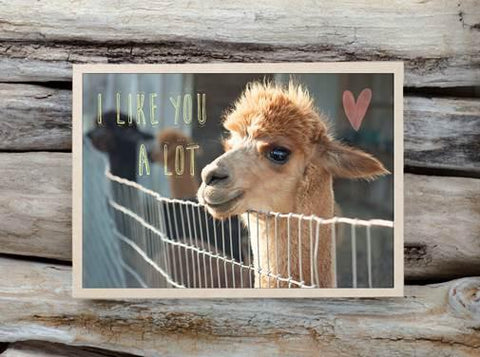 Alpaca Greeting Card - I Like You A Lot - Purely Alpaca