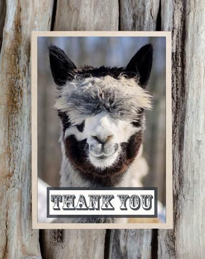Alpaca Greeting Card - Thank You