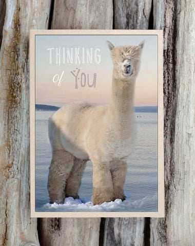Alpaca Greeting Card - Thinking of You - Purely Alpaca