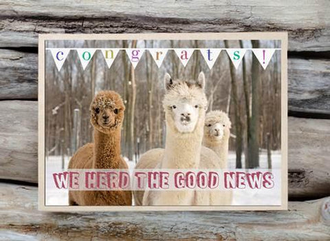 Alpaca Greeting Card - We Herd the Good News - Purely Alpaca
