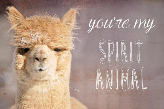 Alpaca Greeting Card - You're my Spirit Animal