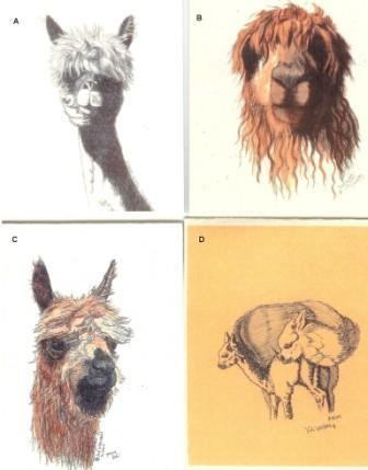 Alpaca Greeting Cards by Dee - Purely Alpaca