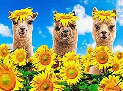 Avanti Alpaca Greeting Card - Happy Sunny, Funny Birthday - Purely Alpaca