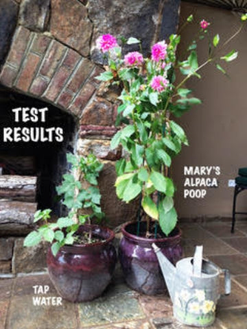 Mary's Amazing Alpaca POOP Plant Fertilizer - Purely Alpaca