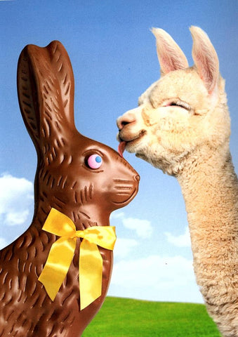 Avanti Alpaca Greeting Card - Alpaca and Bunny - Easter - Purely Alpaca
