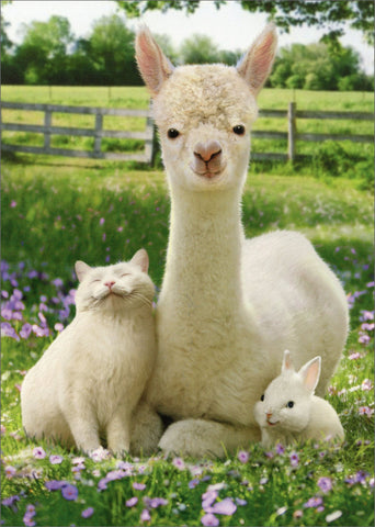 Avanti Alpaca Greeting Card - Alpaca. Bunny, Cat - Easter - Purely Alpaca