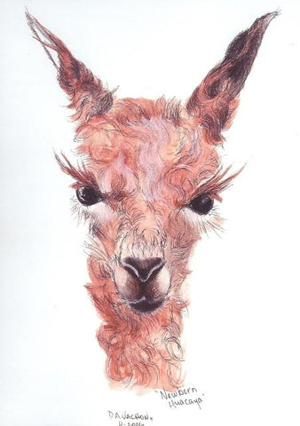 Newborn Alpaca Greeting Card by Dee Artist Dee VachonMiller