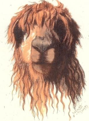 Shaggy Watercolor Alpaca Art Print - Purely Alpaca