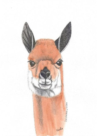 Vicuna Alpaca Greeting Card by Dee - Purely Alpaca
