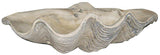 Clam Shell Garden Art Statue Lifelike Cement 22.5W