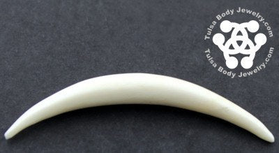 Bone Septum Tusk by Oracle Body Jewelry