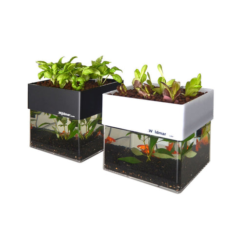 Wuldmar Ecocube- In-home Aquaponics