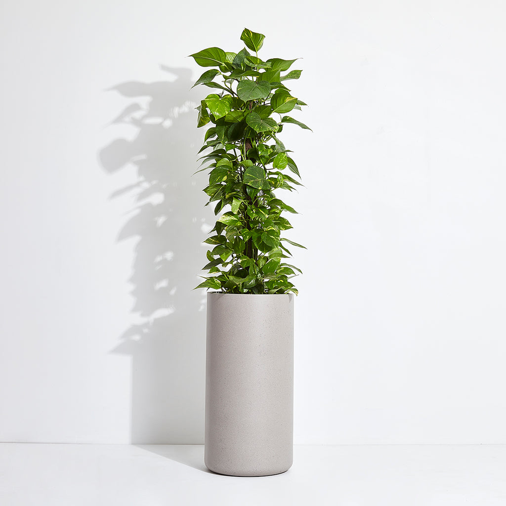 Audrey Pot