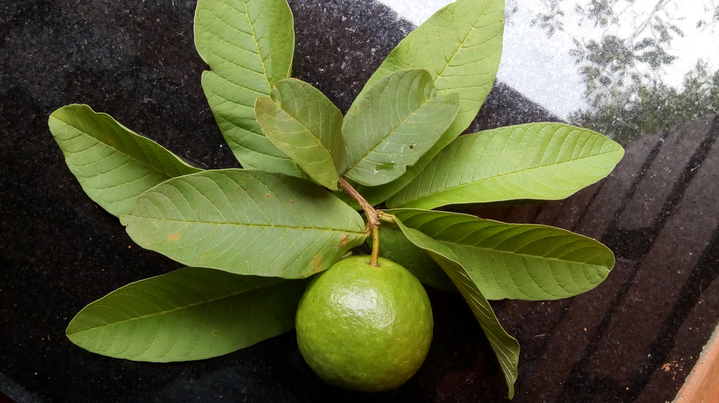 Guava Leaf Powder