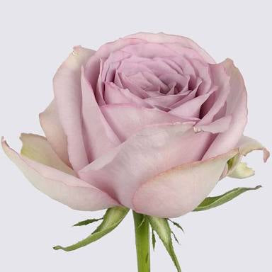 Roses, Flowers in Wellington, Lower Hutt and Porirua city and local subrbs flower delivery New Zealand