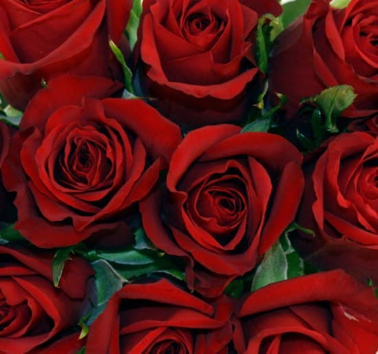 Red Roses for Valentines Day gifts for her or him from your Wellington florist in NZ