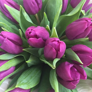 Purple Tulip flowers bouquet in Wellington New Zealand - Same day flower delivery Wellington - Flower Shop Florist Wellington NZ