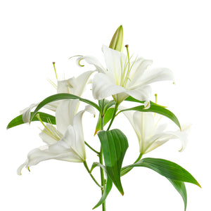 open white lilies scent flowers Wellington florists New Zealand florist shop online flower delivery