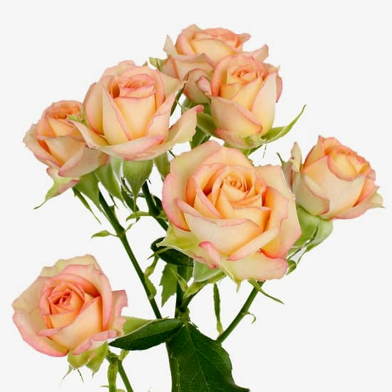 Azore Spray Rose flowers- peach Posy flowers - Mini Roses flowers - Flower Shop Florist Wellington NZ