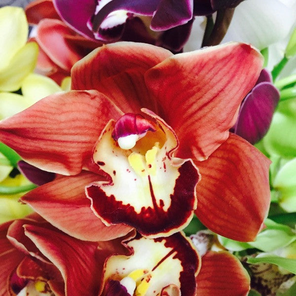 Burgundy brown orange orchid www.flowershopflorist.nz