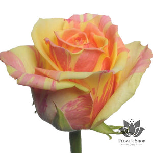 Fiesta Bi Colour Yellow and Pink Roses bouquet Flower Shop Florist Wellington NZ Flowers delivery