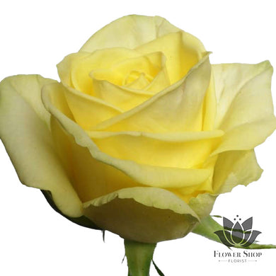 Fresh Moment Soft Yellow Roses bouquet Flower Shop Florist Wellington NZ flowers delivery