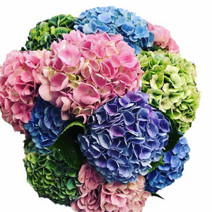 Hydrangea Flowers - Flower Shop Florist Wellington New Zealand flower delivery