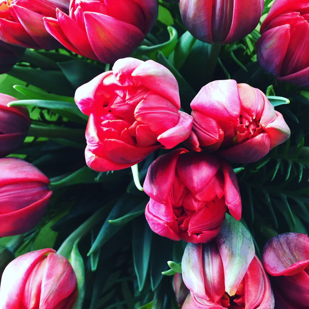 Red Tulips flowers Bouquet | Flower Shop Florist Wellington NZ