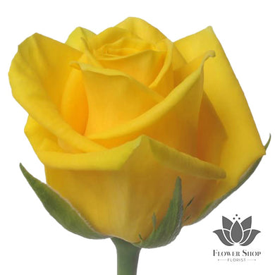 Yellow Roses bouquet - flower delivery Wellington - Flower Shop Florist Wellington NZ