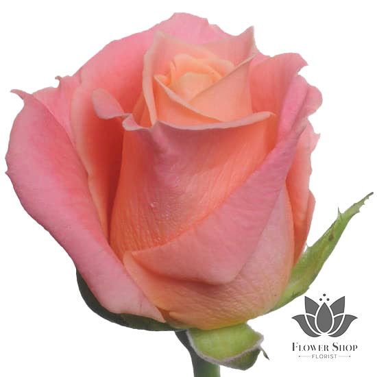 Miss Piggy Coral Pink Peach Roses Bouquet  Flower Shop Florist Wellington NZ flower delivery
