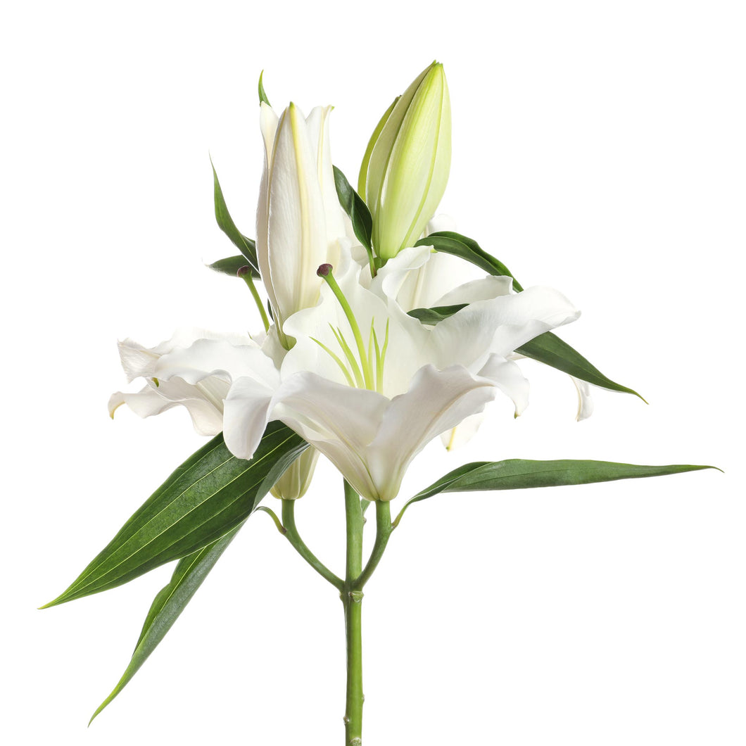 white oriental lilies flowers bouquet Wellington florists New Zealand flower delivery shop online