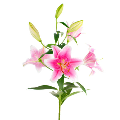 PInk lilies flower bouquet in Wellington flower delivery by florists