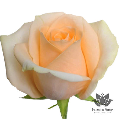 Peach Avalanche Roses Bouquet - Flower Shop Florist Wellington NZ flowers delivery