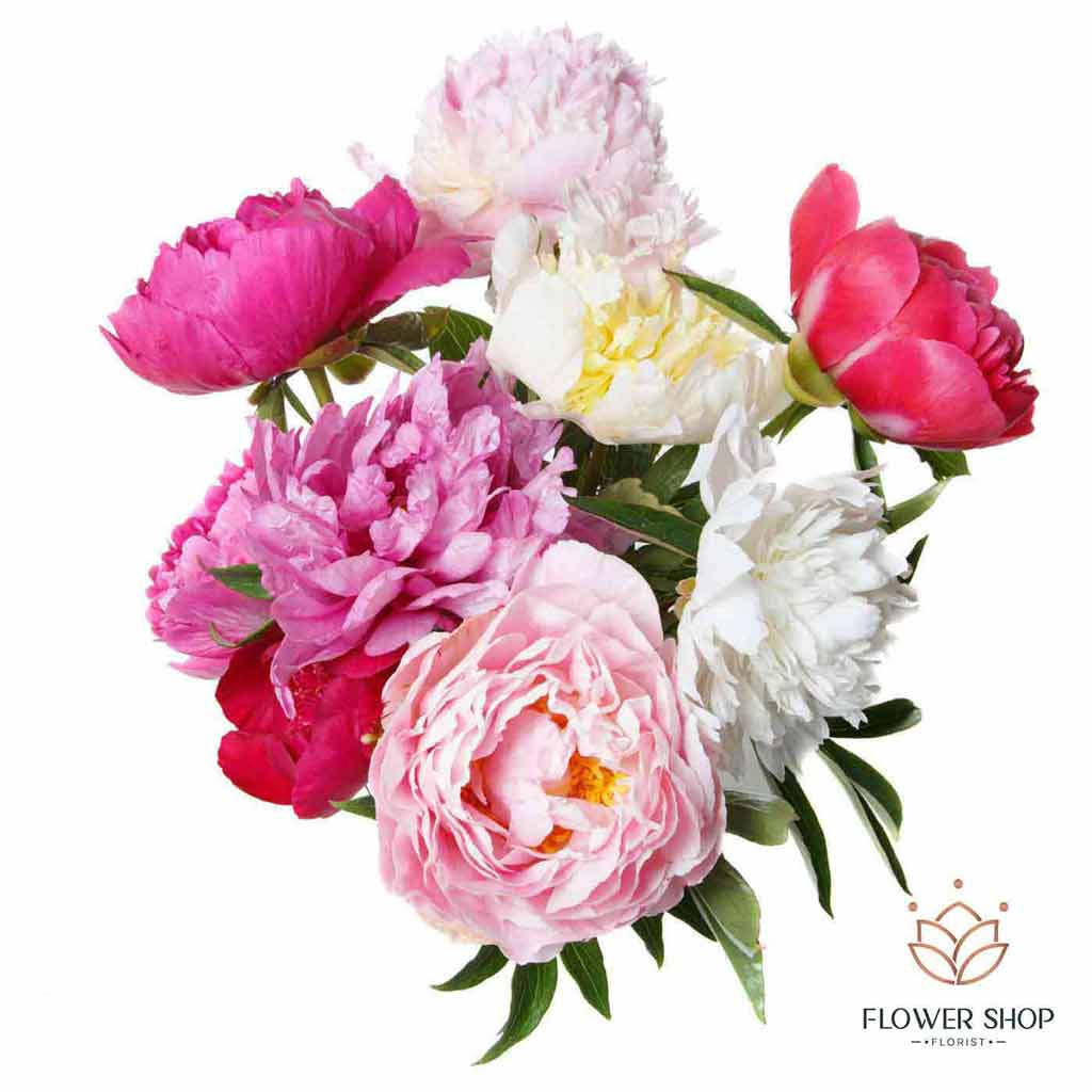 Peony peonies colourful bunch of mix flowers delivery - Flower Shop Florist Wellington NZ
