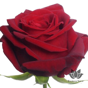 Red roses bouquet delivery Flower Shop Florist Wellington flowers delivery NZ