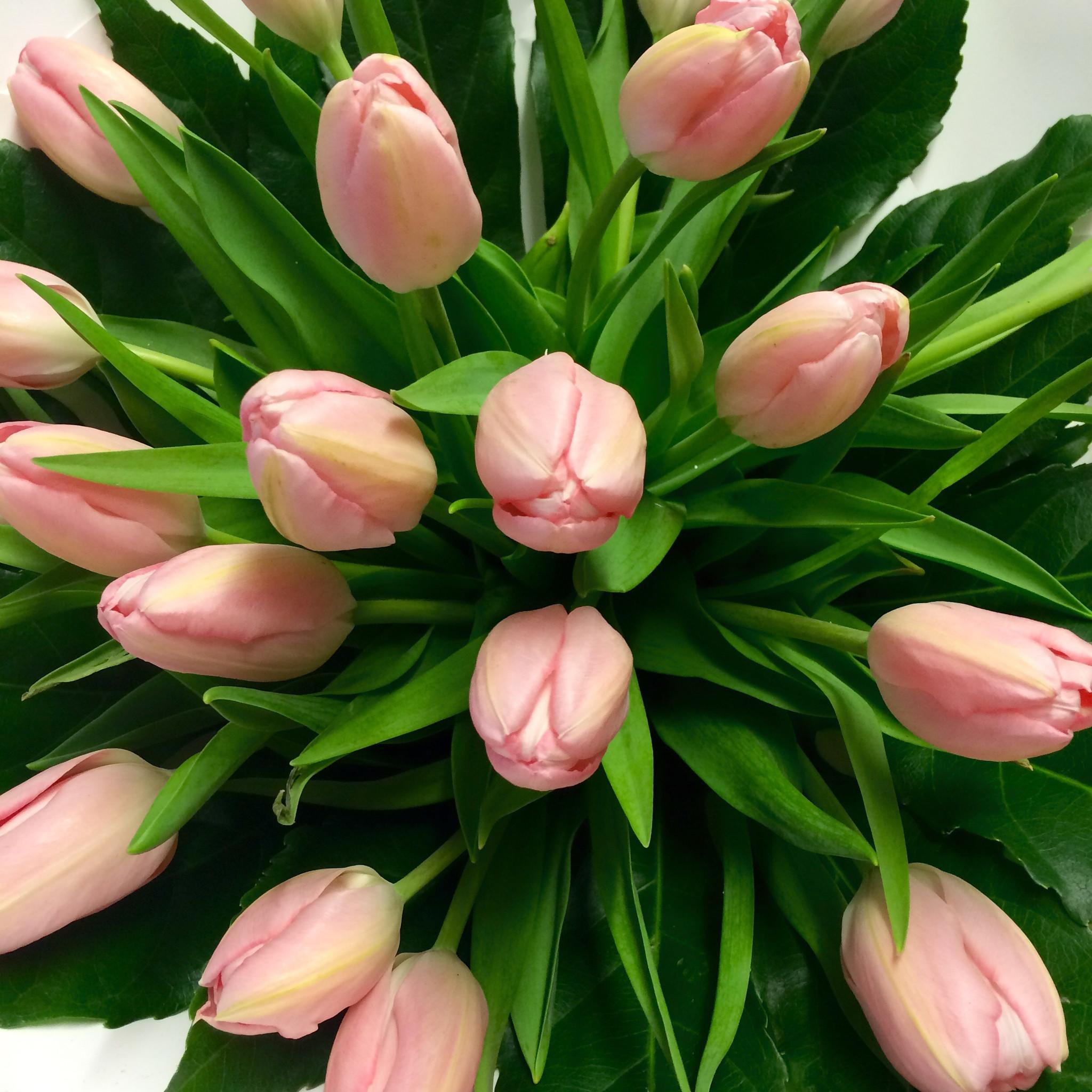 Tulips Flowers Pink - Tulip Flowers Bouquet - Flower Shop Florist Wellington NZ