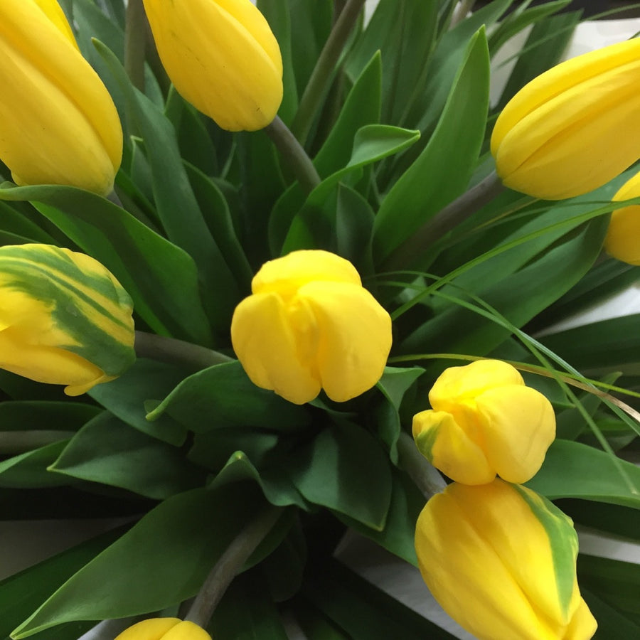 Tulip Flowers Yellow - Flowers Bouquet Wellington NZ - Flower Shop Florist Wellington NZ