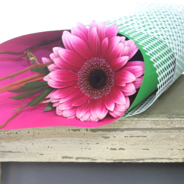 Single Soft Colour Gerbera - Gerbera Flowers Wellington NZ - Flower Shop Florist Wellington NZ