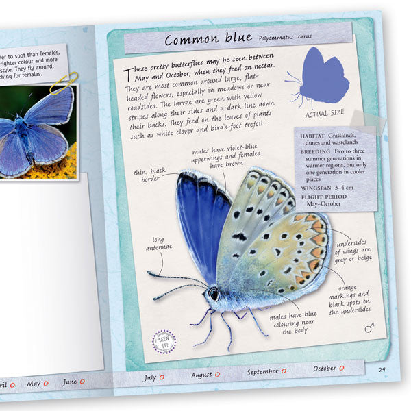 Butterflies and Moths Handbook