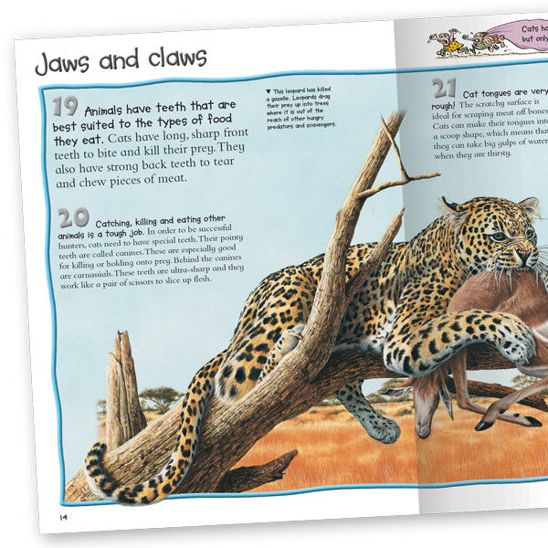Tiger Tales And Big Cat Stories Summary
