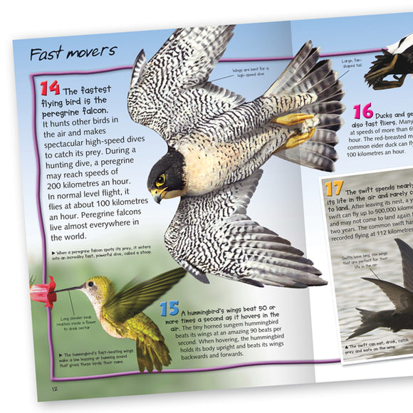 Pocket Edition 100 Facts Birds